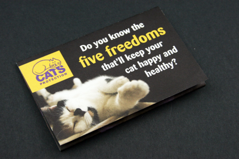 cats-protection_2